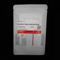 [EFT-RAN-0050] Random Hexamers primer